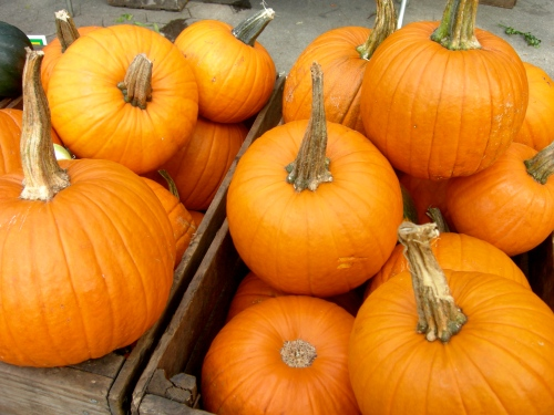 pumpkintimeyay